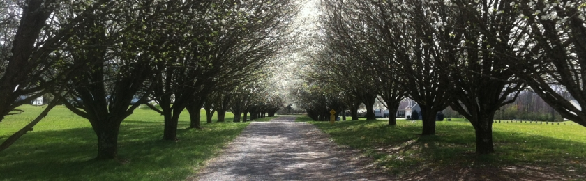 Driveway in Spring - Wide and Thin